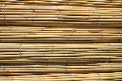 Bamboo Thai