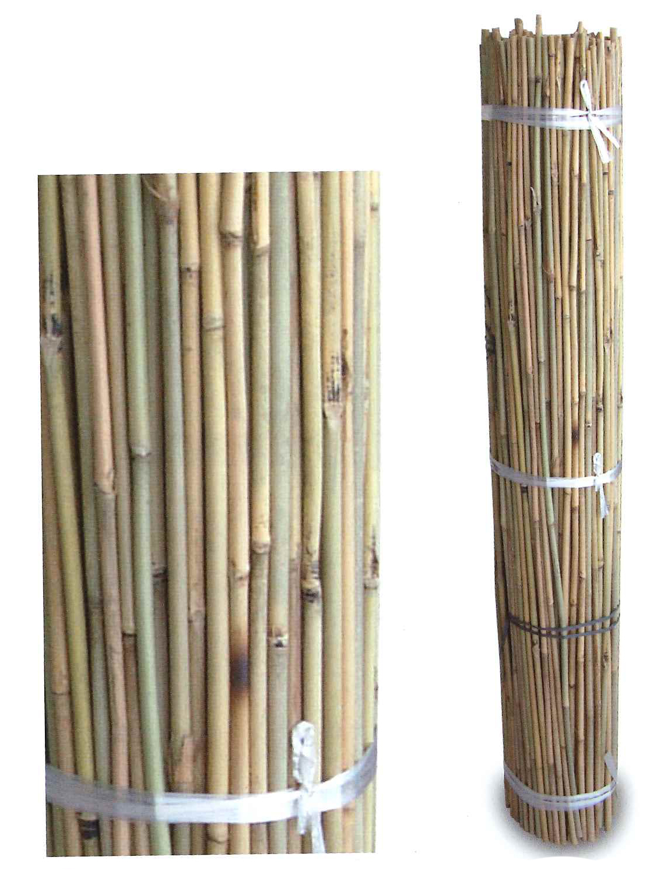Bambú xinès