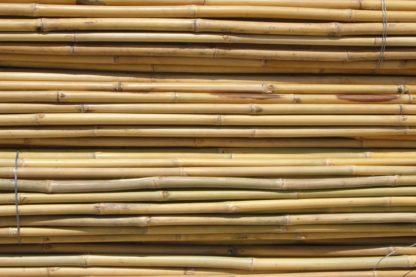 Bambou Thaïlandais