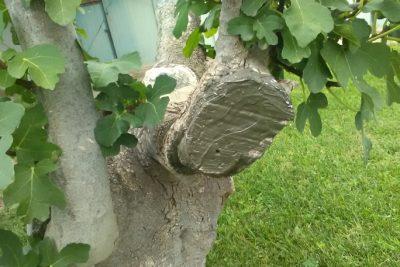 14 Pasta cicatrizante para árboles