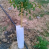 protectors arbres