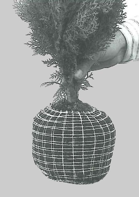 malla elastica algodon 2