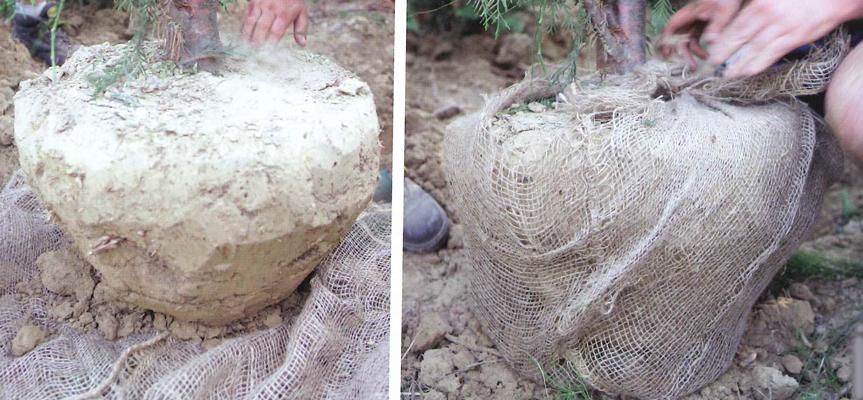 material-cepellones-3-web